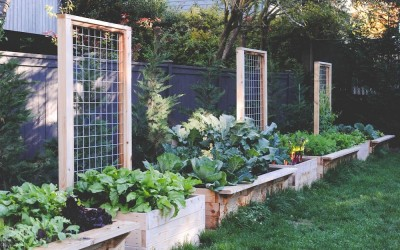 Top 10 Reasons To Grow An Organic Food Garden