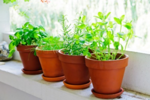 Tips for Creating Your Own Herb Garden